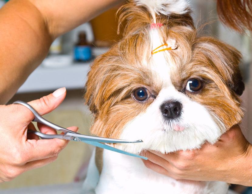 Kto powinien zostać psim fryzjerem?